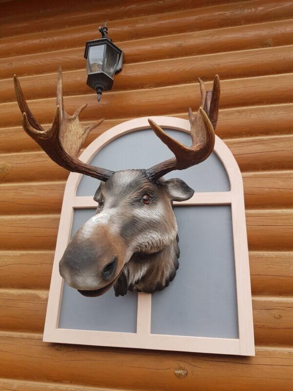 Голова лося выглядывающая из окна